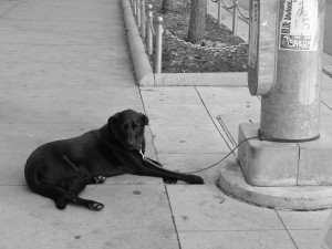 Lonely Black Lab, Downtown Rondinelli, 2013